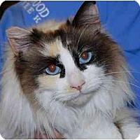 Adopt A Pet :: Precious - Modesto, CA