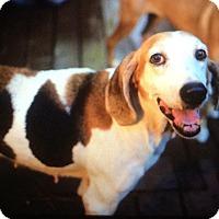 Adopt A Pet :: Jackie - Orange Lake, FL