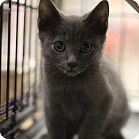 Adopt A Pet :: Dickens - Sacramento, CA