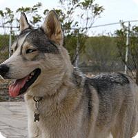 Adopt A Pet :: Nova - Alamogordo, NM