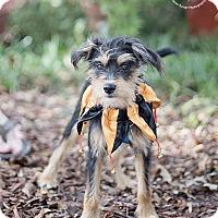 Adopt A Pet :: MacGyver - Kingwood, TX
