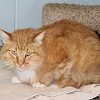 Adopt A Pet :: Garla - Atmore, AL