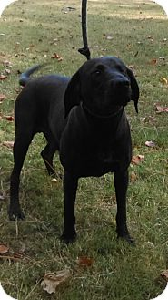 Labrador Retriever Mix Dog for adoption in Woodstock, Georgia - Grace
