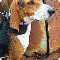 Adopt A Pet :: Whitney - Chattanooga, TN