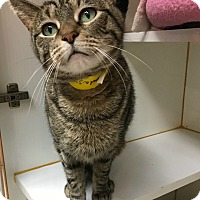 Adopt A Pet :: Montague - Oak Park, IL