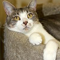 Adopt A Pet :: Mandi - Harrison, NY