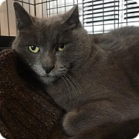 Adopt A Pet :: Cinder - Naugatuck, CT