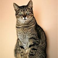 Adopt A Pet :: Spice - Adams, WI