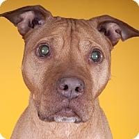 Adopt A Pet :: Alice - Chicago, IL