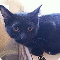 Adopt A Pet :: Kiki III - Austin, TX
