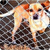 Adopt A Pet :: Mr. Sharpe - Fowler, CA