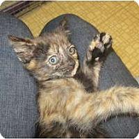 Adopt A Pet :: Aurora - Sterling Hgts, MI