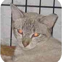 Adopt A Pet :: EVE - Jenkintown, PA