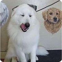 Adopt A Pet :: Shilo - Minneapolis, MN
