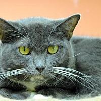 Adopt A Pet :: David 8442 - Atlanta, GA