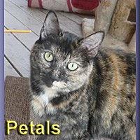 Adopt A Pet :: Petals - Aldie, VA