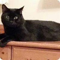 Adopt A Pet :: Inky - Colmar, PA