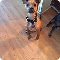 Adopt A Pet :: Tucker - Malaga, NJ