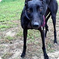 Adopt A Pet :: Skittles - Swanzey, NH