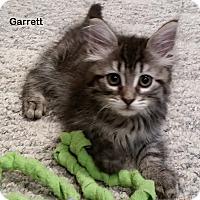 Adopt A Pet :: Garrett - Portland, OR