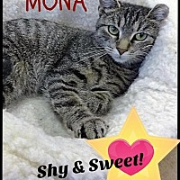Adopt A Pet :: Mona - Gettysburg, PA