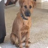 Adopt A Pet :: Mindi - San Antonio, TX