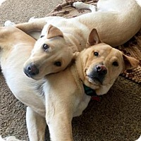Adopt A Pet :: Koda & Bear *Adoption Pending* - Torrance, CA