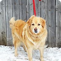 Adopt A Pet :: Tessa - Shelby, MI