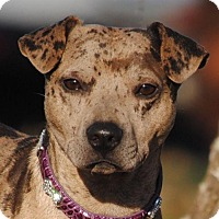 Adopt A Pet :: Skeeter - Cedartown, GA