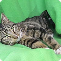 Adopt A Pet :: Hobbs - Boise, ID