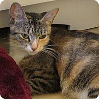 Adopt A Pet :: Serena - Tampa, FL