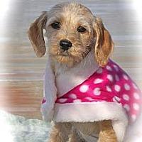 Adopt A Pet :: Buttercup - Albany, NY