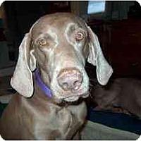 Adopt A Pet :: Maggie - Attica, NY