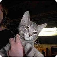 Adopt A Pet :: Devan - Warren, MI