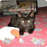 Adopt A Pet :: Zeppy - Warren, OH