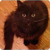Adopt A Pet :: Blackie - Muncie, IN