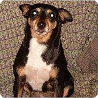 Adopt A Pet :: Daisy Mae - Seattle, WA
