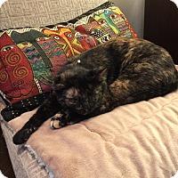 Adopt A Pet :: Sheila - Birmingham, AL