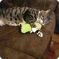 Adopt A Pet :: Tiger - Dawson, GA