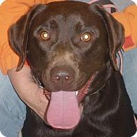 Adopt A Pet :: Bentley 2016 (m/c) ADOPTION PE - Chesterfield, MI