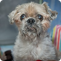 Adopt A Pet :: Perry - New York, NY