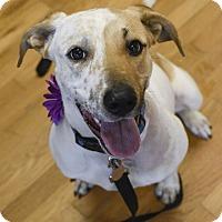 Adopt A Pet :: Mara - Homewood, AL