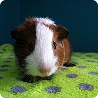 Adopt A Pet :: Zip - Coral Springs, FL
