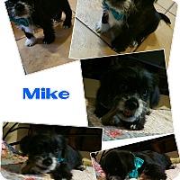 Adopt A Pet :: Mike - LAKEWOOD, CA