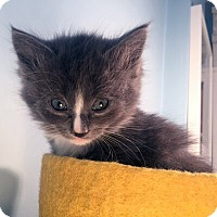 Adopt A Pet :: Jane - Mississauga, Ontario, ON