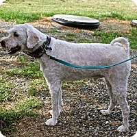 Adopt A Pet :: Charley - Winters, CA