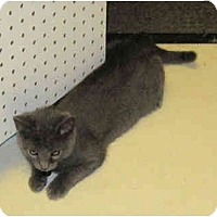 Adopt A Pet :: Smokey - Catasauqua, PA