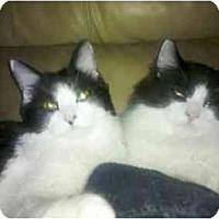 Adopt A Pet :: Jamie & Matthew - Riverside, RI
