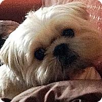 Adopt A Pet :: Gelato - Toronto, ON