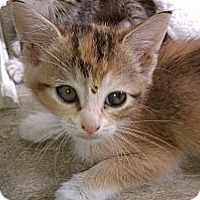 Adopt A Pet :: Precious - Morgan Hill, CA